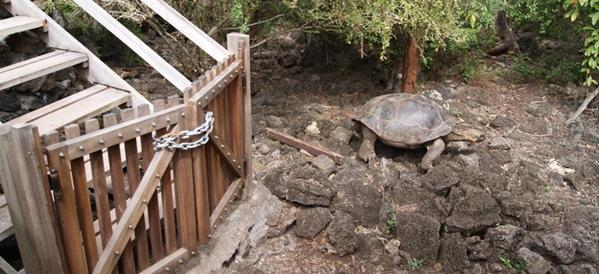 Tortoise pens locked up