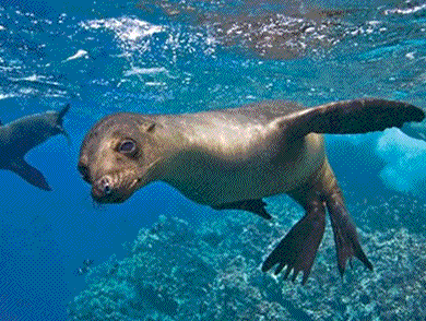 home-seal.png